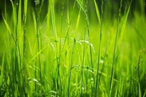 sekání trávy Praha